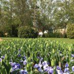 Dorfplatz mit Blumenbeet im Vordergrund und Maibaum im Hintergrund